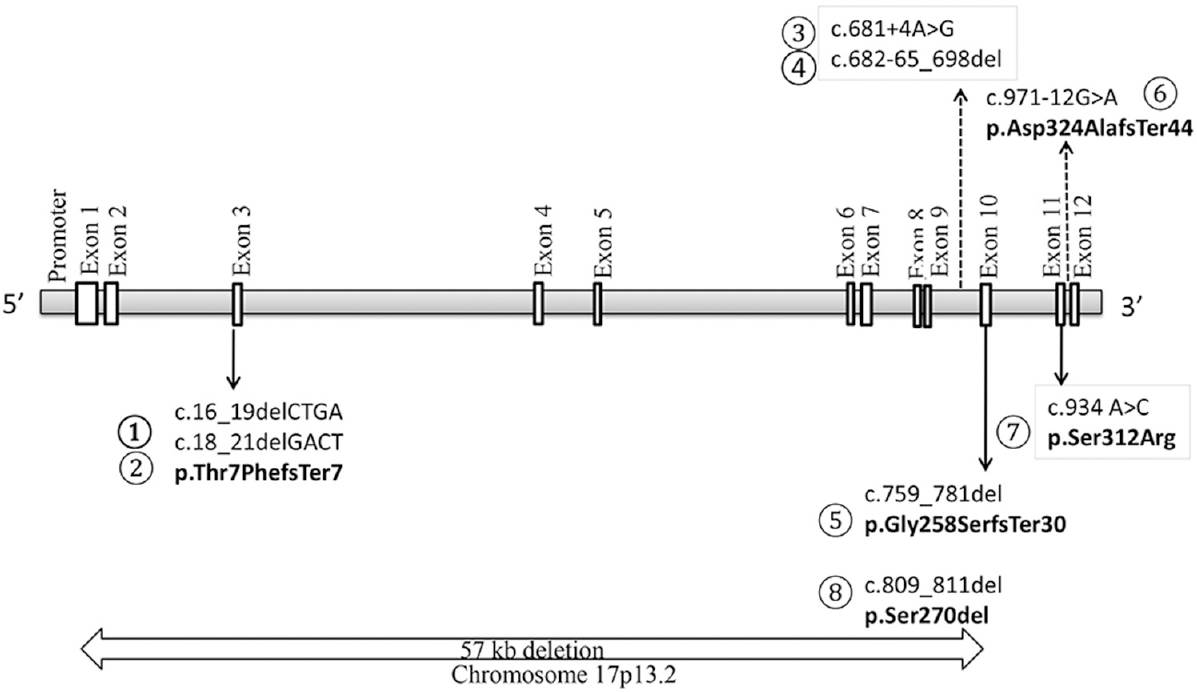 Figure 1: Cystinosin gene. Variants within boxes depict rare/novel variants not reported in cystinosis. Dashed arrows show intronic variants while bold arrows show exonic variants. The 57 kb large deletion, commonly reported from European cohorts, was not noted in the present patients